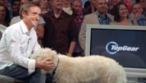 Richard Hammond TopGear dog