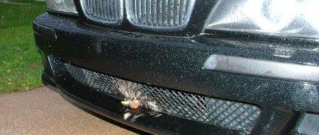 BMW M5 vs vogel