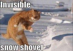 Lolcat doet sneeuwruimen