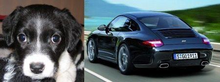 Porsche 911 en Beagle Collie