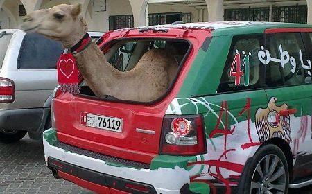 Range Rover Sport met kameel