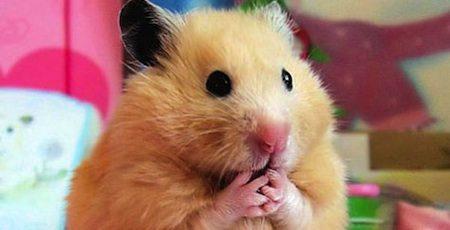 OMG Hamster denkt er het zijne van
