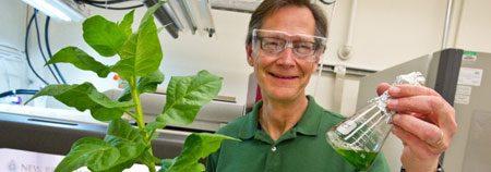 Biobrandstof uit tabaksplanten!