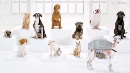 The Force, maar dan met honden