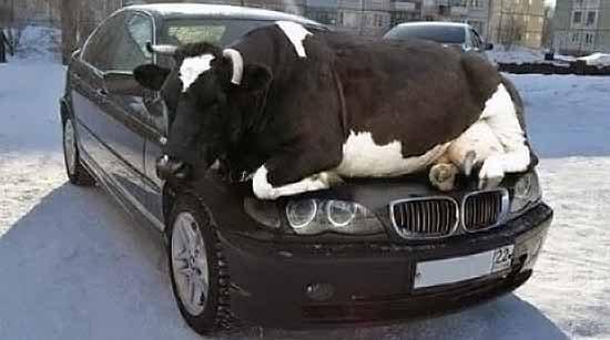 Boeren Mest Wagen