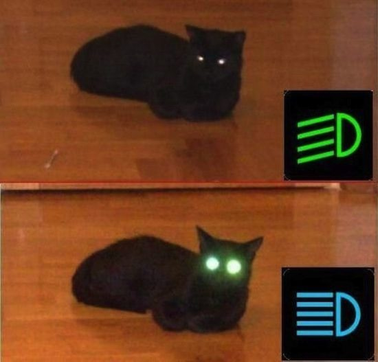 D'awwww, lief katj-ALL HAIL HEADLIGHT BEAM KITTY!