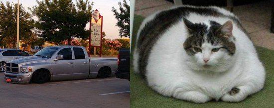Ram-cat