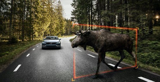 Volvo-Moose