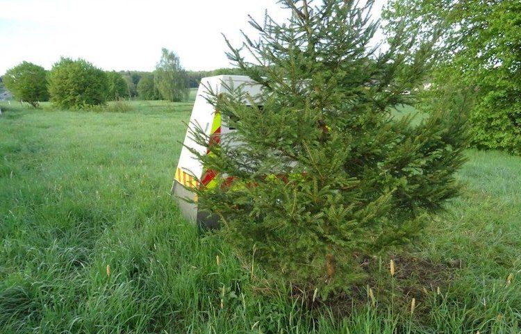 Snelheidsboete vermijden? Plant een boom!