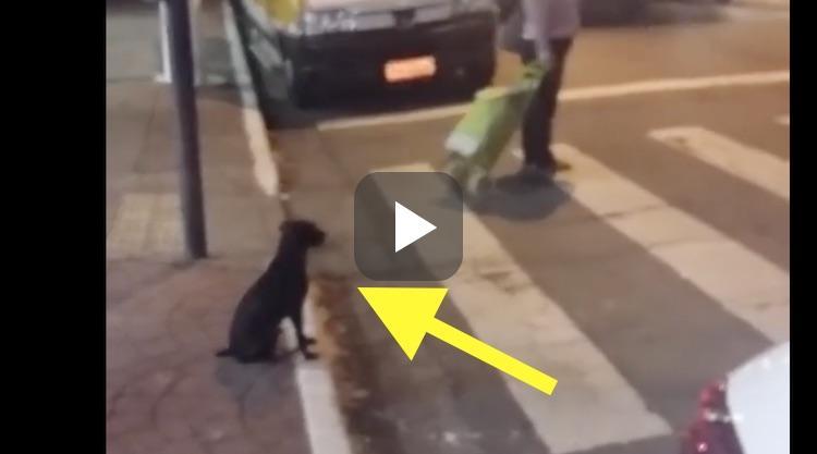 Video: deze hond is slimmer dan je denkt
